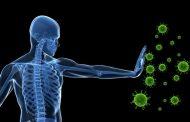یازده غذای موثر بر سیستم ایمنی